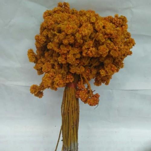 Foto Produk Bunga edelwais kuning - Kuning dari Kusuma Dewi Craft