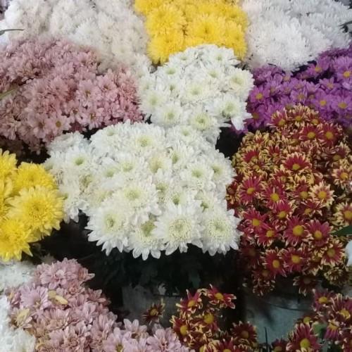 Foto Produk bunga krisan/bunga aster - Kuning dari Home Flower Nawra