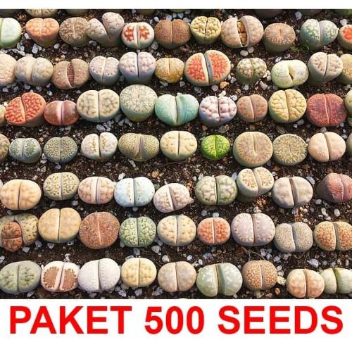 Foto Produk Biji Benih Lithops Mix (Living Stone) 500 biji dari Biji Benih