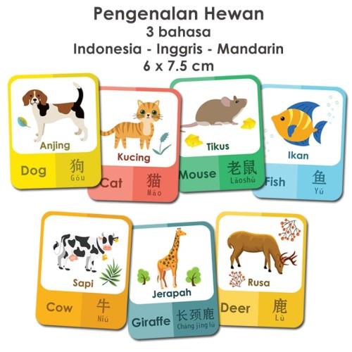 Foto Produk Flashcard pengenalan hewan 3 bahasa / kartu pintar anak dari Little Mochi