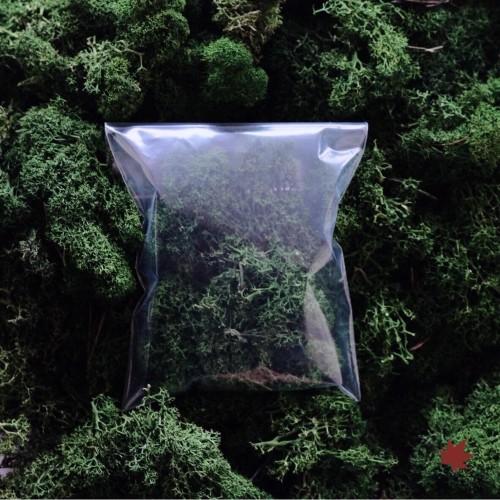 Foto Produk PRESERVED MOSS 10G - GREEN - GREEN dari PREFLEUR ONLINE