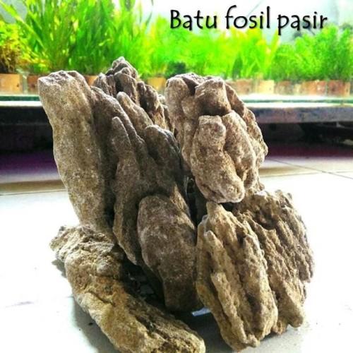 Foto Produk batu aquascape batu fosil pasir grade A 1kg dari kikizhu shop