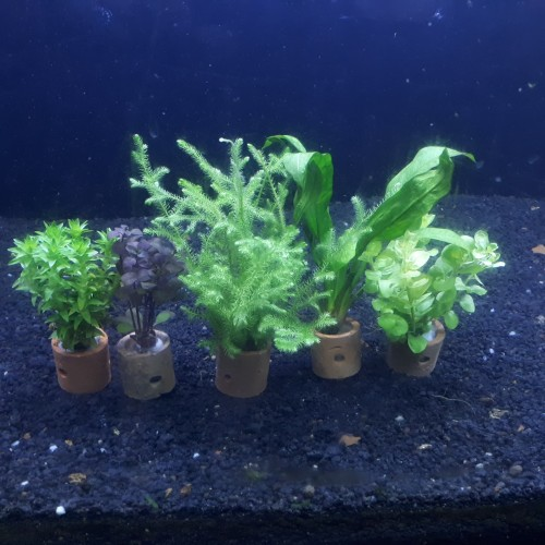 Foto Produk Paket 5 Pot Tanaman Aquascape Mix 1 dari Nagatawa Ornamental Fish