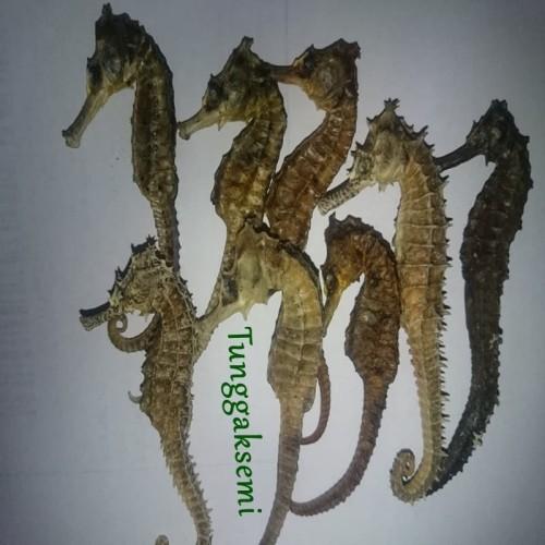 Foto Produk PROMO Kuda Laut Kering Herbal Joss dari bawang dayak herbalku