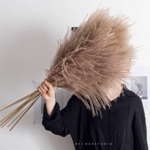 Foto Produk [1 Tangkai] Stypha Feather Dried Grass / Dried Flower / Preserved Flow - Putih dari Floristsupply
