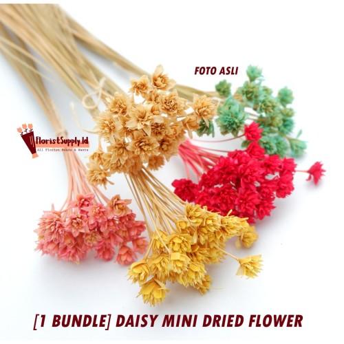 Foto Produk [1 BUNDLE] MINI DAISY Dried Flower / Preserved Flower - Merah dari Floristsupply