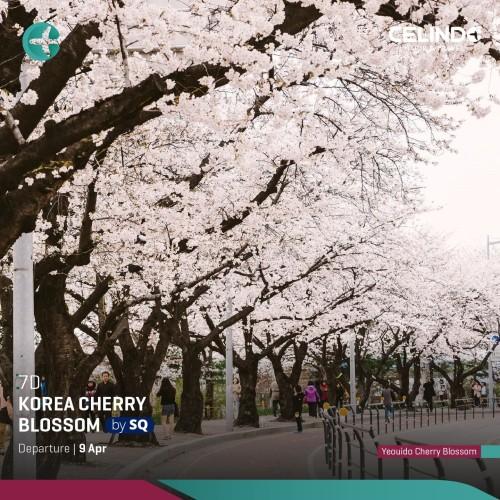 Foto Produk Korea Cherry Blossom [7D/ 09 April 2020/ by SQ] [Down Payment] dari Celindo Tour & Travel