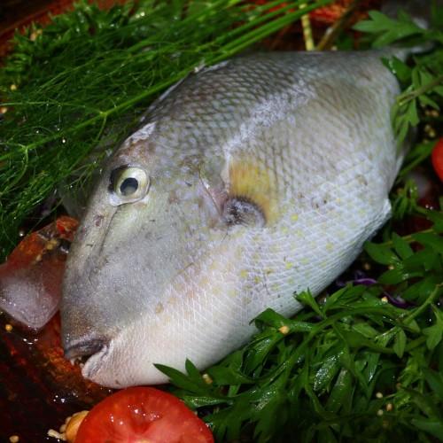 Foto Produk Ikan Pakol / Ayam-Ayam dari Berkat Dua Ikan Seafood