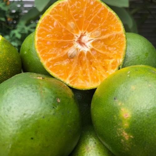 Foto Produk Buah Jeruk Siam Segar 1kg - Jeruk Peras Manis dari Halona Utama