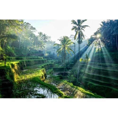 Foto Produk 4D3N EXPLORE WATERFALL & CULTURAL VILLAGE dari Jagat Tours & Travel