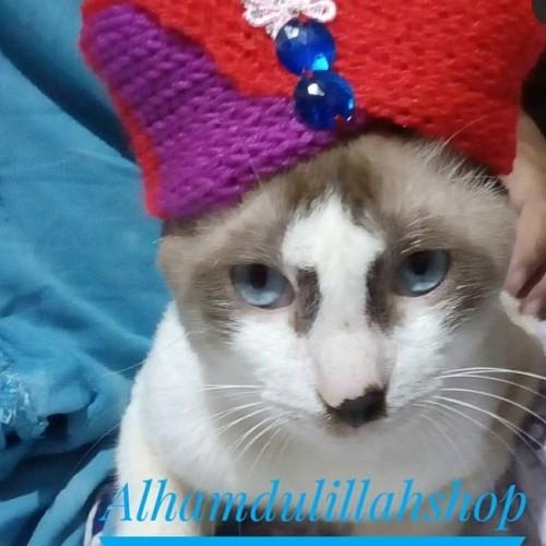 Foto Produk turban untuk kucing dari alhamdulillahshop