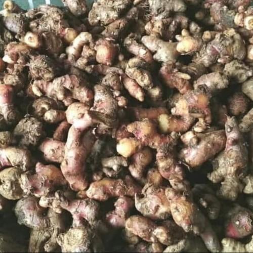 Foto Produk Jahe Merah Fresh 1000gram/1kg ukuran kecil dari Orlin2672