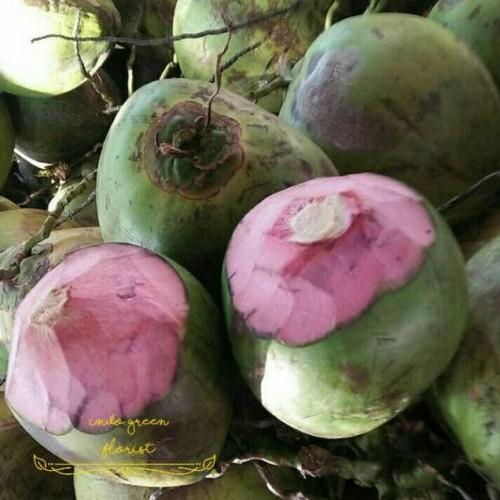 Foto Produk Bibit kelapa wulung / kelapa hijau wulung / kelapa ijo asli 1000% dari alfarisishop_