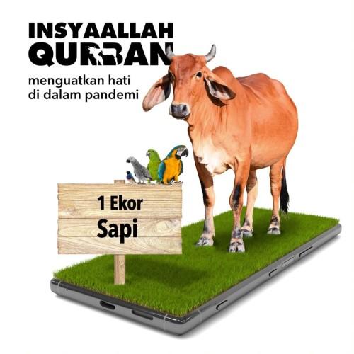 Foto Produk Qurban 1 Sapi Tipe A dari Human Initiative