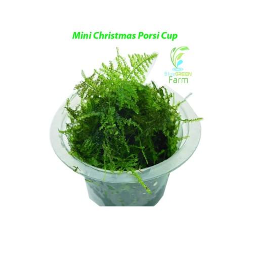 Foto Produk Moss Mini Christmas Xmas Bahan Porsi Cup - Lumut Tanaman Aquascape dari BlueGreenFarm