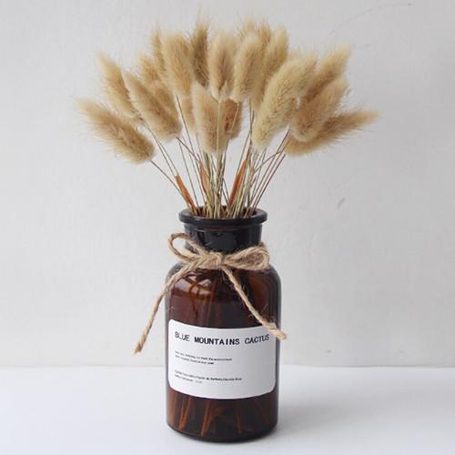 Foto Produk Bunny Tail Grass 10HELAI - Bunga Kering Lagurus Natural - Dried Flower dari Menyala