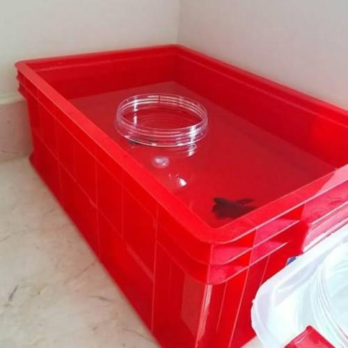 Foto Produk Green Leaf 2245 P Box Container Industri / Bak Kolam Ikan 2245P dari laulau