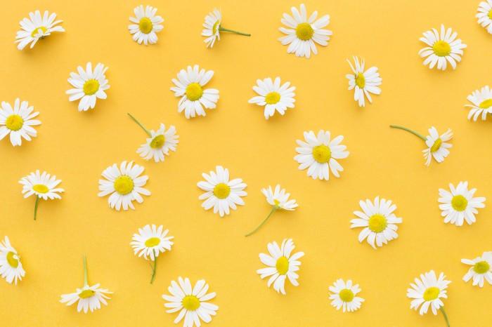 Jual Background Alas Foto Produk A3 (Bunga Kuning) - Kab. Boyolali - Smart  Offset   Tokopedia