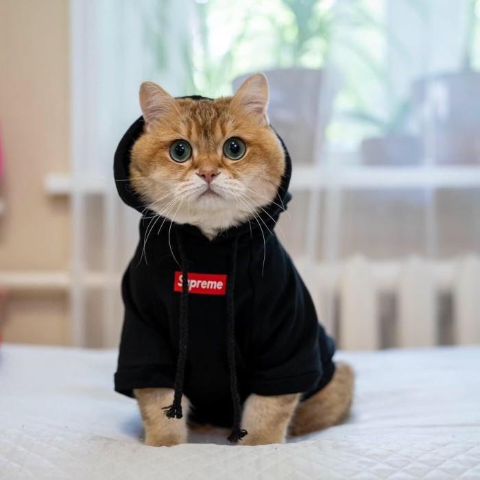 Jual Baju Jaket Anjing Kucing Hewan Lucu Supreme Kaos Dog Cat Shirt Hoodie Merah S Jakarta Utara Apolos Shop Tokopedia