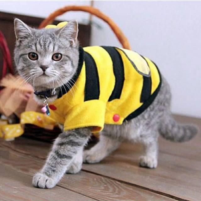 Harga Baju Kucing