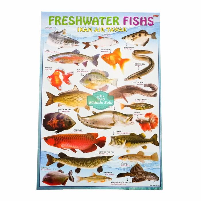 Jual Poster Edukasi Ikan Air Tawar 35x50cm Ecer Per 1 Lembar Kota Surakarta Toko Widodo Solo Tokopedia